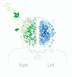 Left / Right Brain (Hemispheric Dominance)